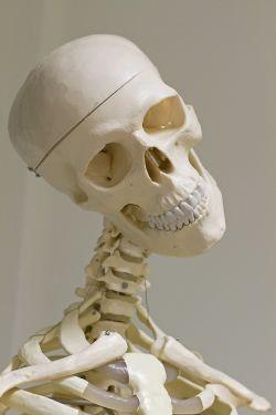 dorn-breuss Skelett grinst