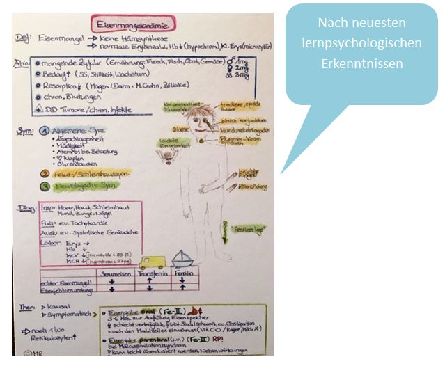Lernkarten für Heilpraktiker-Prüfungsvorbereitung